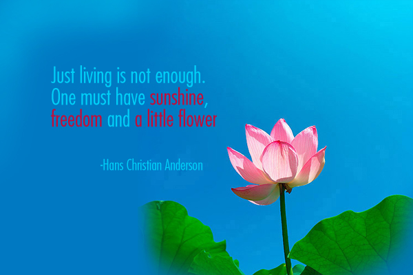 Just living is not enough. One must have sunshine, freedom and a little flower