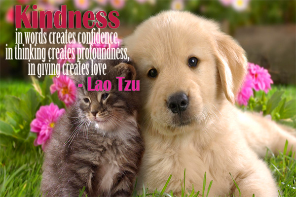 Kindness in words creates confidence, in thinking creates profoundness, in giving creates love